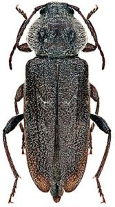 Three beetles became commonly known as 'notifiable beetles'.