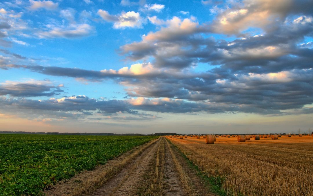 Update on the Land Expropriation Bill